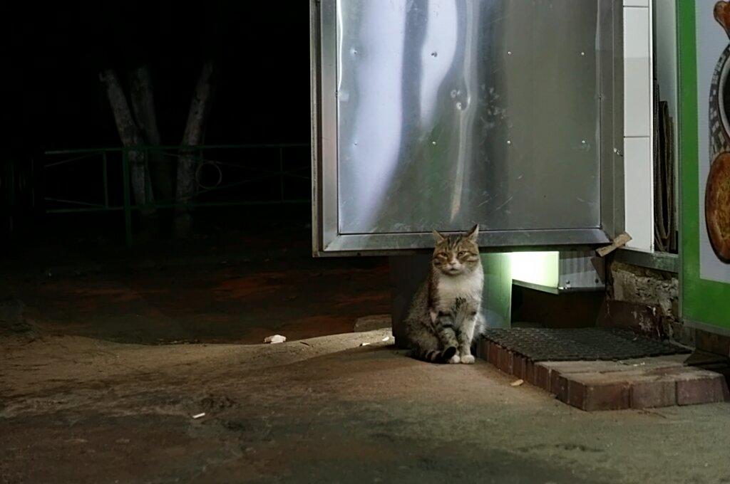 Кот у пекарни