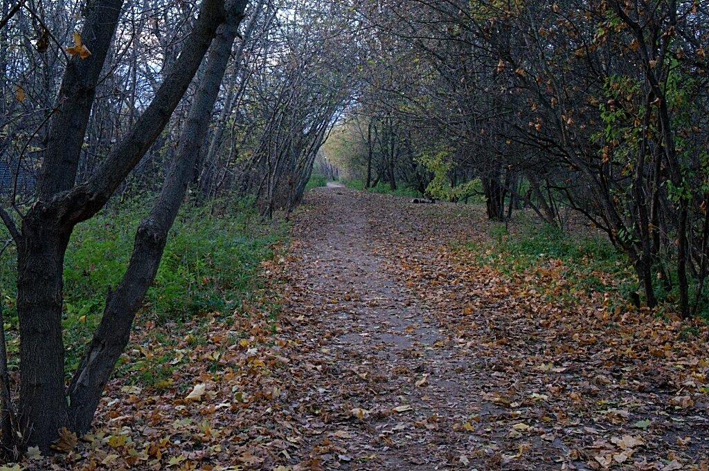 Парк Тушино