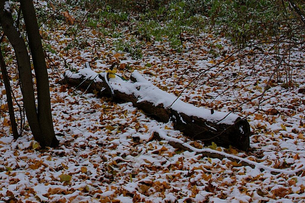 Живописное бревно под снегом