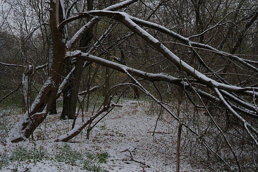 Сломаное дерево